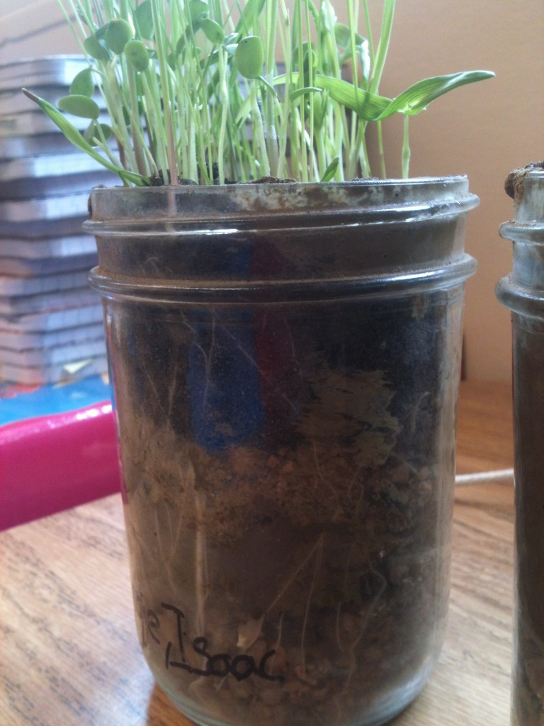 layers of soil in a jar - photo #8